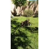 Carrito Ortopedico Para Perros Con Discapacidad. Mediano