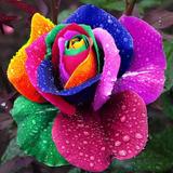 100 Sementes Rosas Exóticas 10 Tipos De Cores