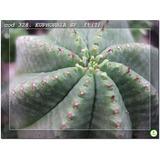 Set Nº5 .x5 Plantas. 35 Variedades. Suculentas-cactus. Nº9.