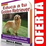 Guía De Entrenamiento Para Perro Golden Retriever 2