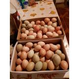 Huevos De Campo Organicos Y Frescos