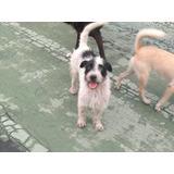 Bellos Perritos En Adopción ,urgente
