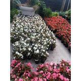 Plantas Florales,todas Estas Variedades.c/u.$35.disfrute