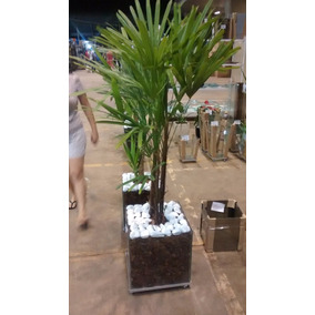 Planta Palmeira Ráfia Vaso De Vidro 35x35x35 Cm