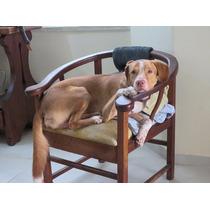 Doação Excelente Cão De Guarda