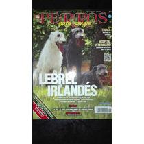 Revista Perros Pura Sangre De La Fcm Lebrel Irlandés