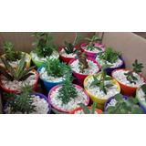 Mini Cactus Suculentas Souvenirs Eventos Comunion Fiesta