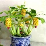10 Sementes De Bananas Várias Cores Bonsai Para Mudas*****
