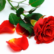 Pétalas De Rosas Vermelha Artificiais 500un Festas Casamento