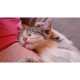 Muchos Gatitos En Adopcion