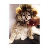 Mascota Del Traje De La Peluca Melena De León Para El Gato D