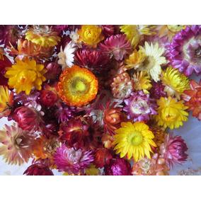 Siempre Vivas O Flores De Papel, Flores Secas X 100 Gr