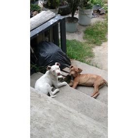 Cachorros 1400 A Tratar, Con Vacunas Y Carnet 2 Meses