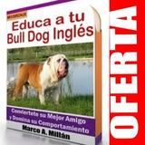 Guía De Entrenamiento Para Perro Bulldog 4