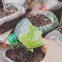 Plantines Lechugas,tomates,albahacas ! Aromatica En Gral