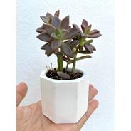 Macetas Mini Cemento Suculentas Cactus Recuerdo 10pza