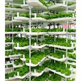 [cod. 100] Como Desarrollar Cultivos Hidroponicos