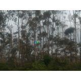 Fazenda Eucalipto 794 Ha Taiobeiras (mg) - Codigo: Fa0219 - Fa0219