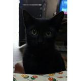 Gatitos 4 Meses En Adopción Responsable Con Seguimiento