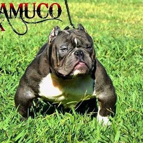 Bully Micro Para Monta Hijo De Chamuco En Promocion