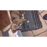 Cachorro En Adopcion Monterrey N.l.