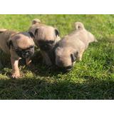 Cachorros Adorables Del Barro Amasado Masculino Y Femenino P