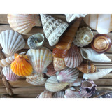 Conchas Mar Filipinas Importado Natural Cesta Vime Mix