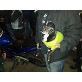 Casco Perro O Gato Mediano, Moto, Ciego