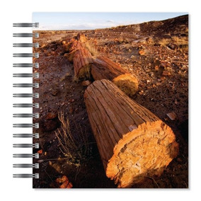 Ecoeverywhere Petrificada Logar Imagen Imagen Álbum De Fotos