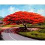Semillas Acacia Roja Certificadas, Bonsai