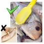 Descamador Escamador Tira Escamas De Peixes Com Reservatório