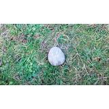 Pet Stone