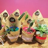 Cactus Y Suculentas Personalizadas + Bombones De Chocolate