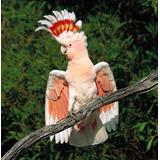 Cacatua Treine Seu Pássaro De Maneira Profissional Aves Ave