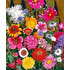 Mezcla de Flores