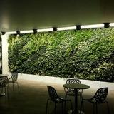 Jardin Vertical - Muro Verde