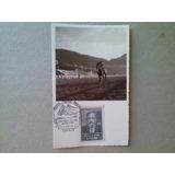 Brasil - Foto Postal, Cavalo Em Hipodromo/ Rj, Cbo Gp Brasil