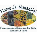 Estrellita, Flores Secas