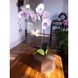 Orquídea Decorativa Em Metal E Madeira