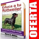Guía De Entrenamiento Para Perro Rottweiler 4