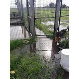 Ayuda A Refugio En Alerta 90 Animales En Riesgo
