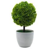 Planta Maceta Decorativa Arbolito (verde Redondo)