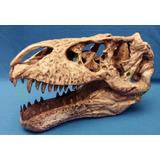 Cráneo De Tiranosaurio Rex