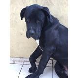 Adopción Lindo Cachorro