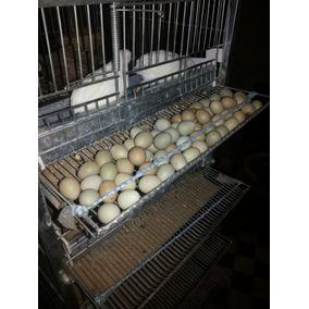 Ovos De Codorna Chinesa