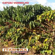 Café Para Torrar E Moer 27kg Tradicional Blend Coffee Brazil