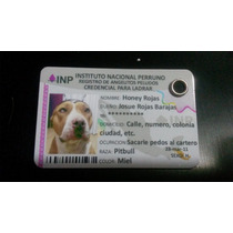 Ife Para Perro Envio A Toda La Republica (ine)