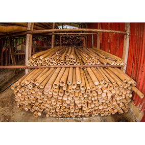 Bambú Preservado ( Tratado) Para Construcción Y Decoración.