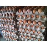 Huevo De Granja De Gallo Gallina