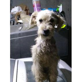 Cachorrita Maltes En Adopcion